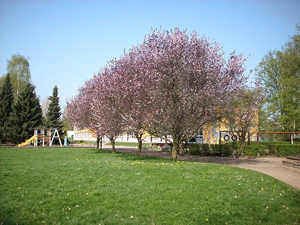 Garten Kita Eisenach